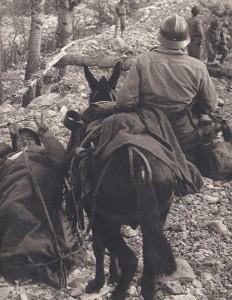 Transport de blessé sur cacolet